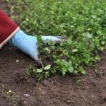 Haven er vigtig for dit boligsalg